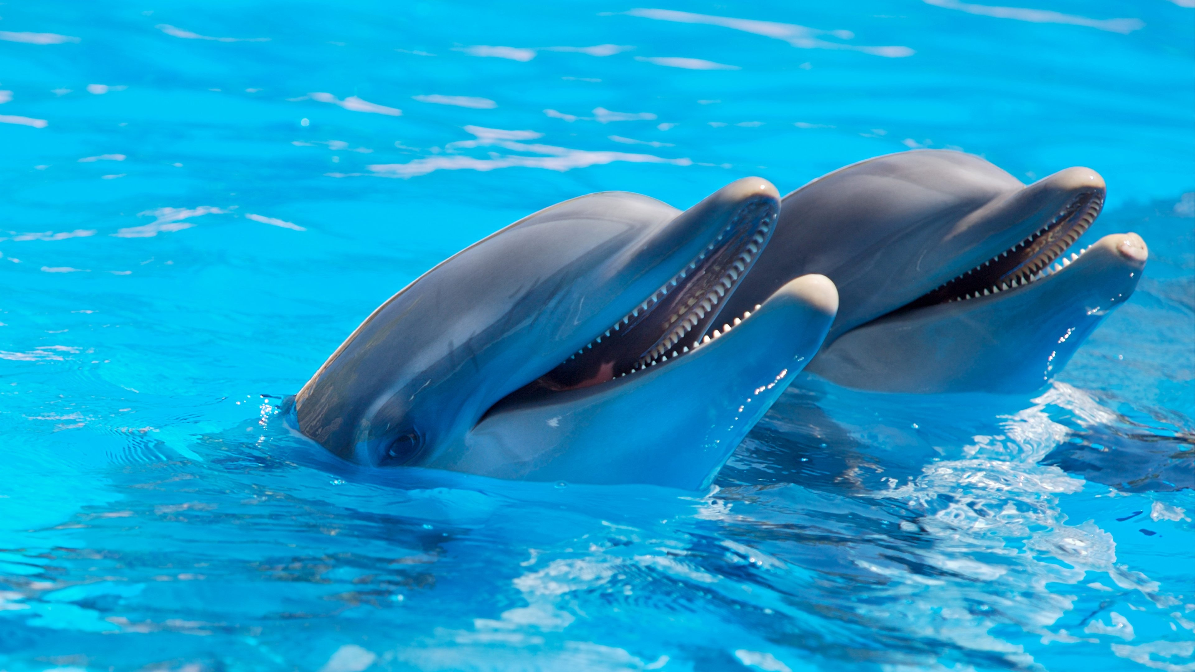 Top Attractions at Sea World Gold Coast